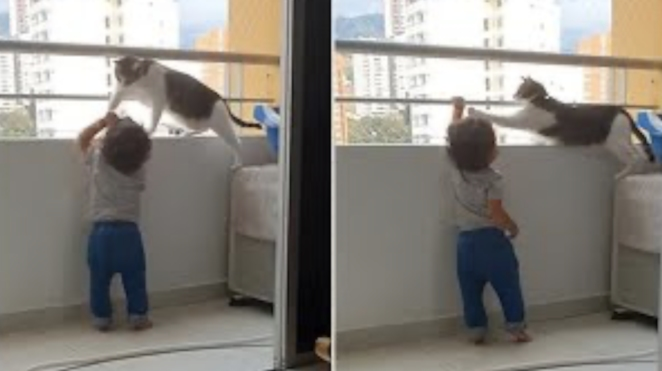 Protective Cat Keeps Kid From Getting Too Close To The Balcony Railings!